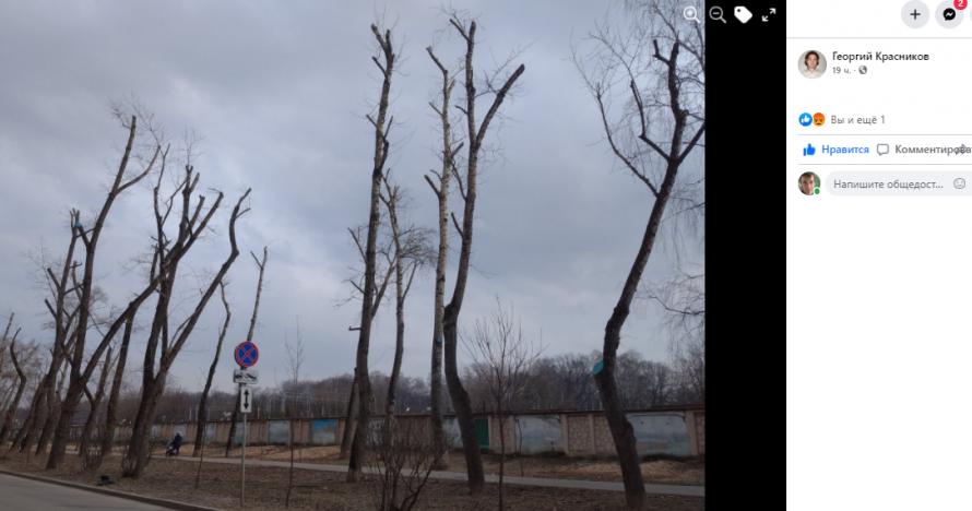 Жители Алексеевского сравнили кронирование деревьев с последствиями падения метеорита